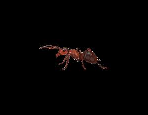 insectos_pelopanton