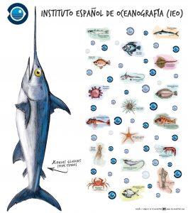 Photocall pez espada y otros peces
