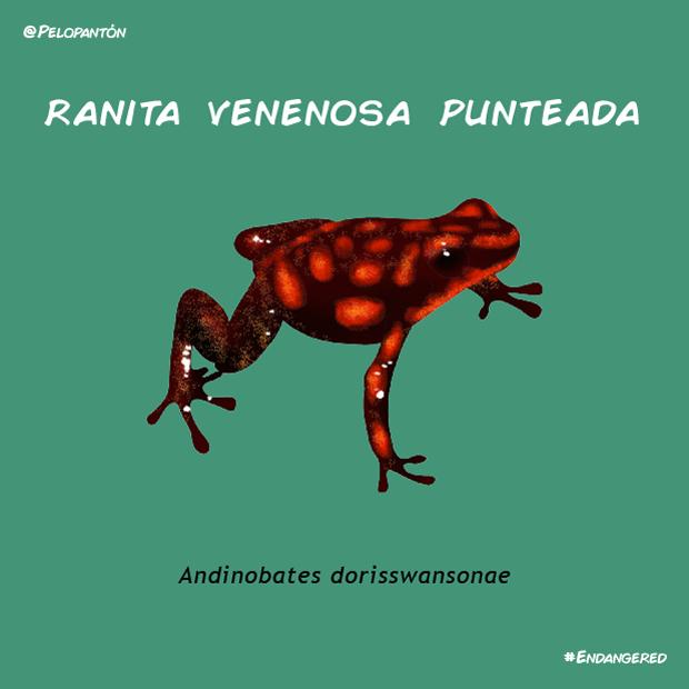 ranita_venenosa_punteada