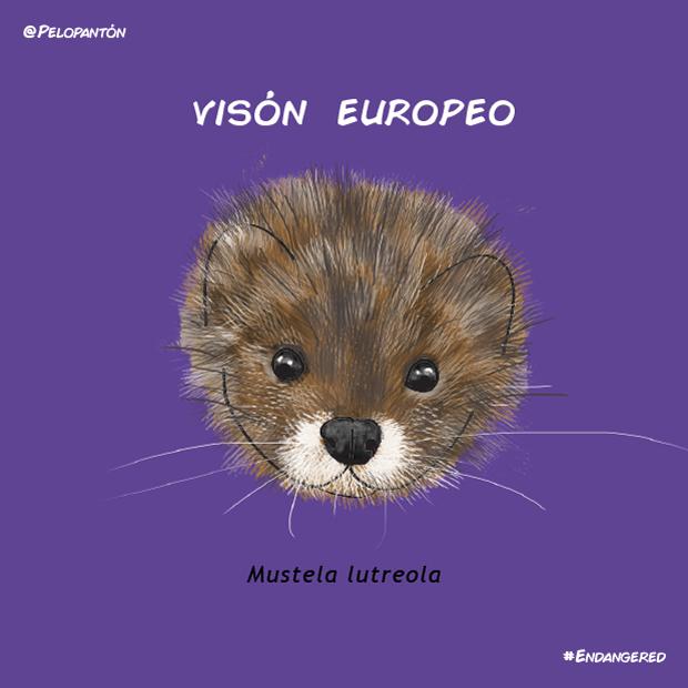 vison_europeo_pelopanton