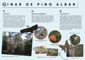 pinar_pino_albar_mncn_csic_pelopanton