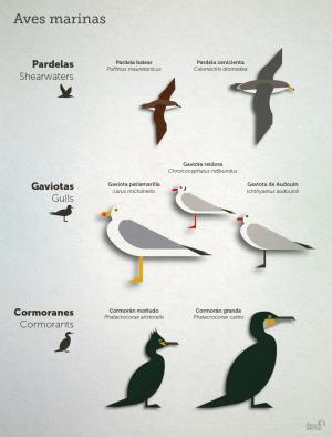 aves_marinas_pelopanton