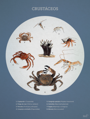 crustaceos_pelopanton