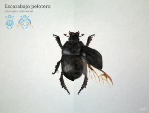 escarabajo_pelotero_pelopanton