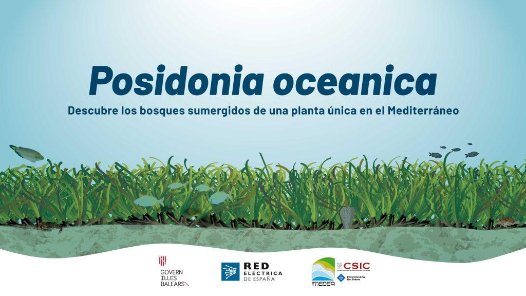 Posidonia oceanica. Descubre los bosques sumergidos de una planta única en el Mediterráneo